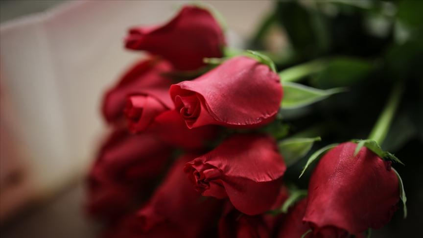 Sevgililer Günü'nde 4,5 milyon civarında gül satışı bekleniyor