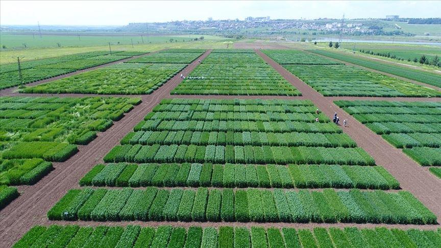 TAGEM tarımsal Ar-Ge projelerine 100 milyon liralık destek sağlayacak