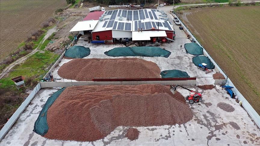 Çam fıstığı üreticisi 30 milyon dolarlık ihracat yaptı