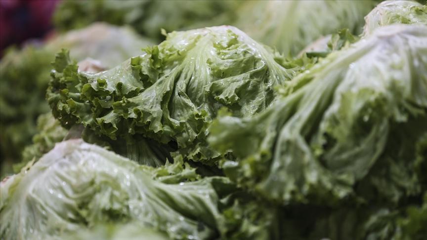 Eylülde en çok kıvırcık salata fiyatı arttı