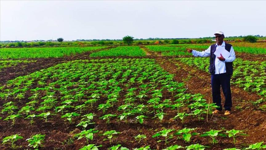 Sudan'da Türk tohumu üretilecek