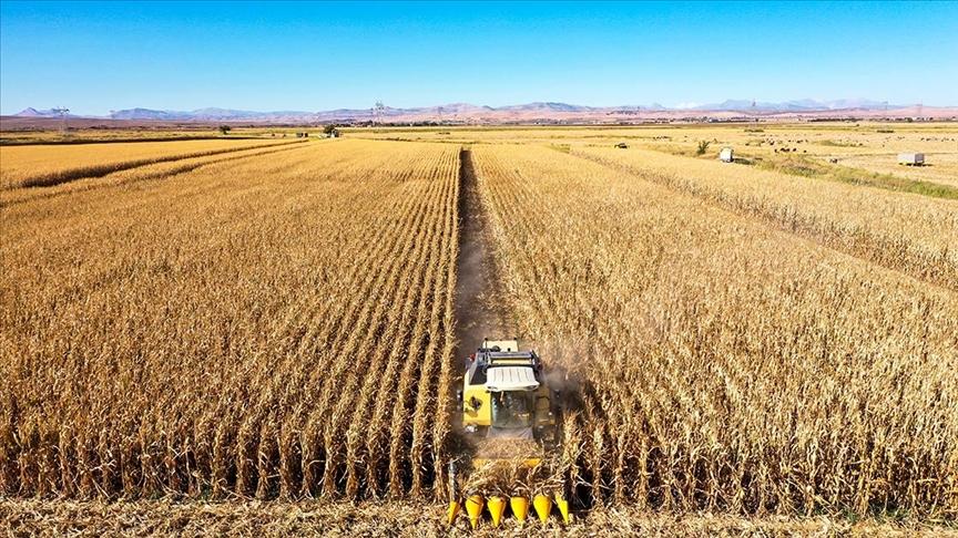 Diyarbakır'da ekim alanı artan mısırda 400 bin ton rekolte bekleniyor