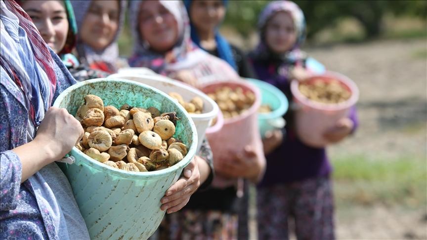 Türkiye,incir ihracatından 256 milyon dolarlık gelir elde etti