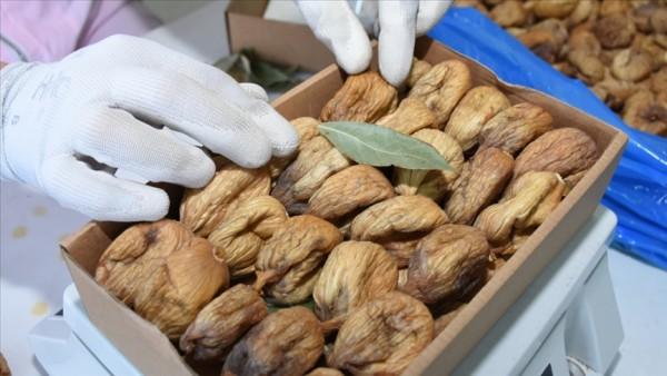 Türkiye'nin kuru incir ihracatı 158 milyon dolara ulaştı